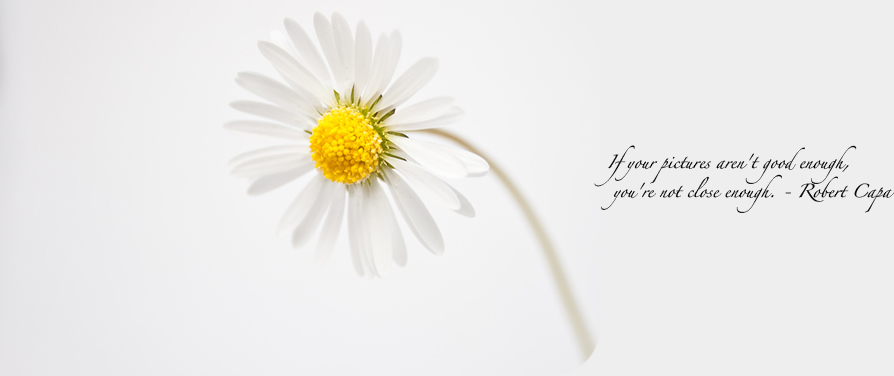 daisy600px_quote