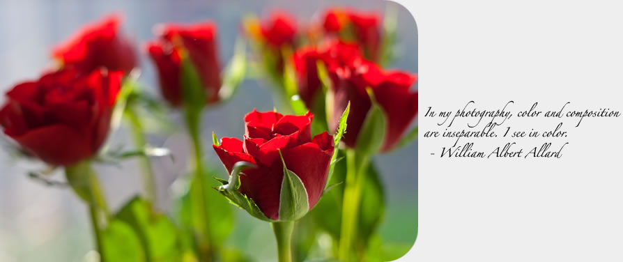 roses600px_quote